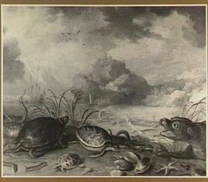 Schildpadden, zeehond en vissen aan de waterkant