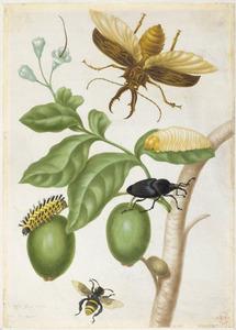 Genipap, palmsnuitkever, kubbesworm, dennenboktor en gele orchideeënbij