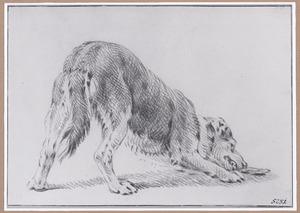 Hond kauwend op een bot