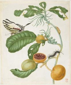 Marmeldoos met rups, zebrapage en gevlekte ambervlieg