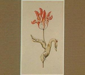 Tulp met slak en lieveheersbeestje