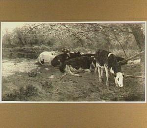Koeien in de schaduw (Onder 't lover)