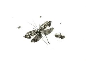 Vijf insekten, waaronder twee sprinkhanen en een tor