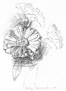 Study of three marigolds in a glass for an album