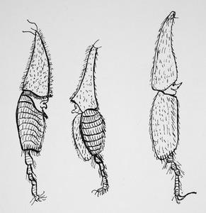 Fantasiefiguur naar een anatomische tekening van een parasiet