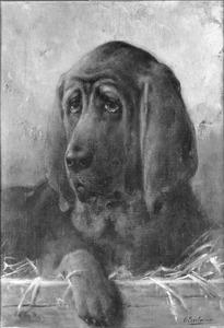 Kop van een St. Hubert hond