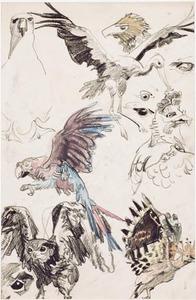 Schetsblad met vogels, o.a. een jan-van-gent, een ooievaar, een papegaai en een hop