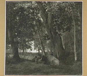 Rustend vee in een bos