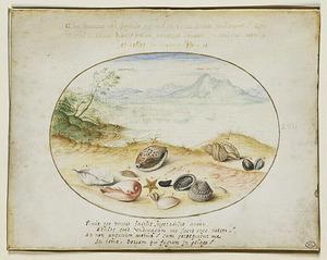 Schelpen op een rivieroever, met in de achtergrond Napels en de Vesuvius