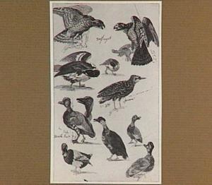 Studies van vogels