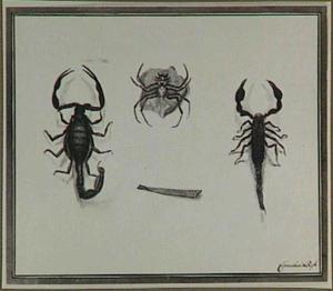 Twee schorpioenen en een spin