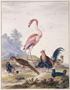 Kuifhoen, chachalaca, flamingo, kipkuiken, haan en twee kuifhoenders in een landschap