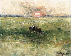 l'Aube dans les polders