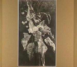Bloemen en blâren