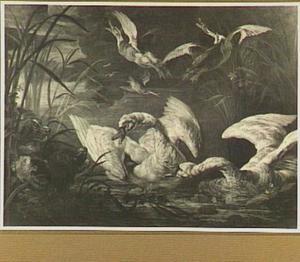 Zwanen  in een plas, opvliegende eenden en links op de oever twee honden