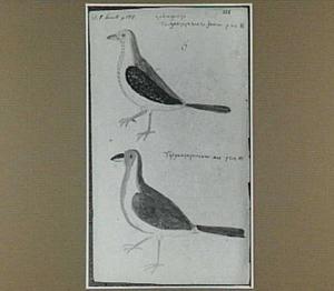 Çabiaguaçu- of Tueguaçuporoara-mannetje en -wijfje (Paroaria cucullata, Braziliaanse vogel)