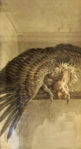 Harpij met gespreide vleugels