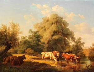 Koeien bij drinkplaats