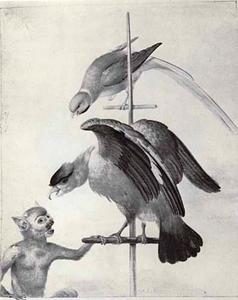 Papegaai en een ara op een stang, aangevallen door een aap