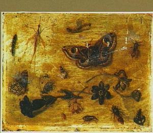 Studie van vlinders, insekten en bloemen