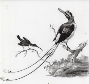 Twee indonesische vogels