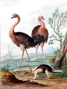 Twee struisvogels en een miereneter
