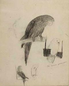 Schetsboekblad met schetsen van papegaaien en kaketoes