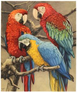 Geelvleugel-, groenvleugel- en blauwgele ara