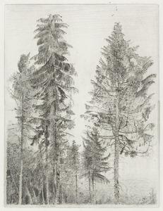 Sparrebomen