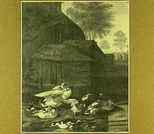 Eenden op een een boerenerf