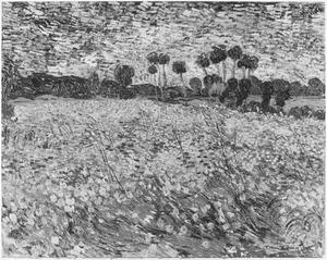 Een veld met klaprozen en alfalfa