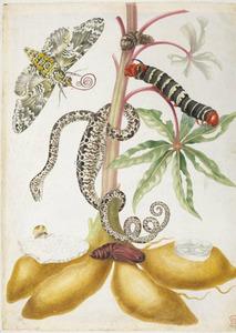 Cassave met tuinboa, tetriopijlstaart, boomnimf, rups en metamorfose van de landelijke pijlstaart