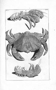 Twee landheremietkreeften en een krab
