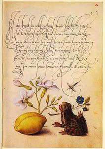 Violier, gewone ereprijs, Amandel en kikker