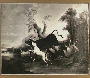 Jachthonden die een stier aanvallen in een landschap