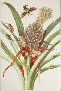 Ananas met diverse soorten kakkerlakken