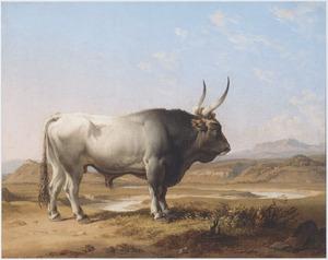 Een stier in een zuidelijk landschap