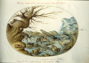 Kikkers, salamanders en hagedissen