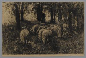 Schapenhoedster met kudde