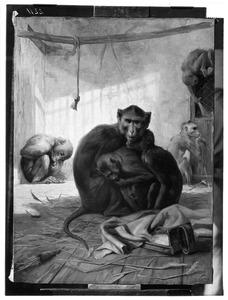 Apen in hun verblijf