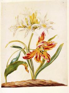 Zeenarcis en tulp