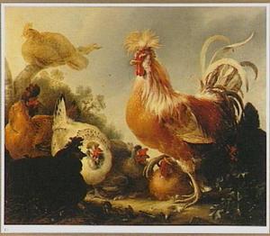 Een haan met zijn kippen op een boerenerf