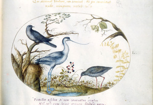 Drie vogels waaronder een kluut