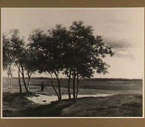 Heidelandschap op de Veluwe