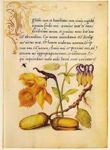 Trompetnarcis, akelei, zomereik