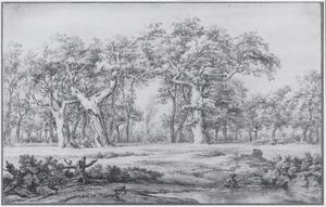 Drie hoge eikenbomen aan de rand van het bos