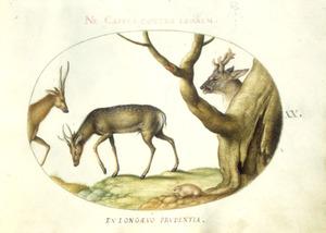 drie herten en een knaagdier