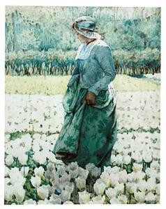 In het tulpenveld
