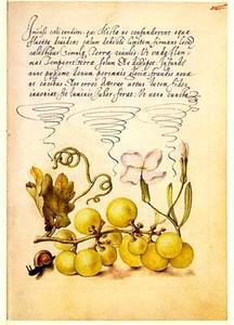 Violier, druiventros en slak
