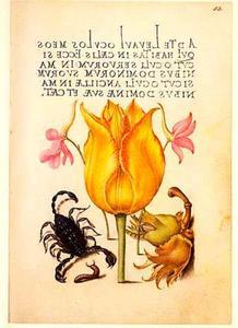 Perzische tulp, ridderspoor, hazelnoot en schorpioen